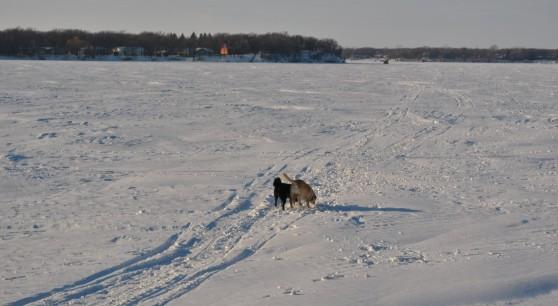 Frozen Lake Walkies